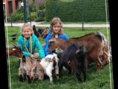 De-Vierhoekhoeve-Kinderen-verbinden