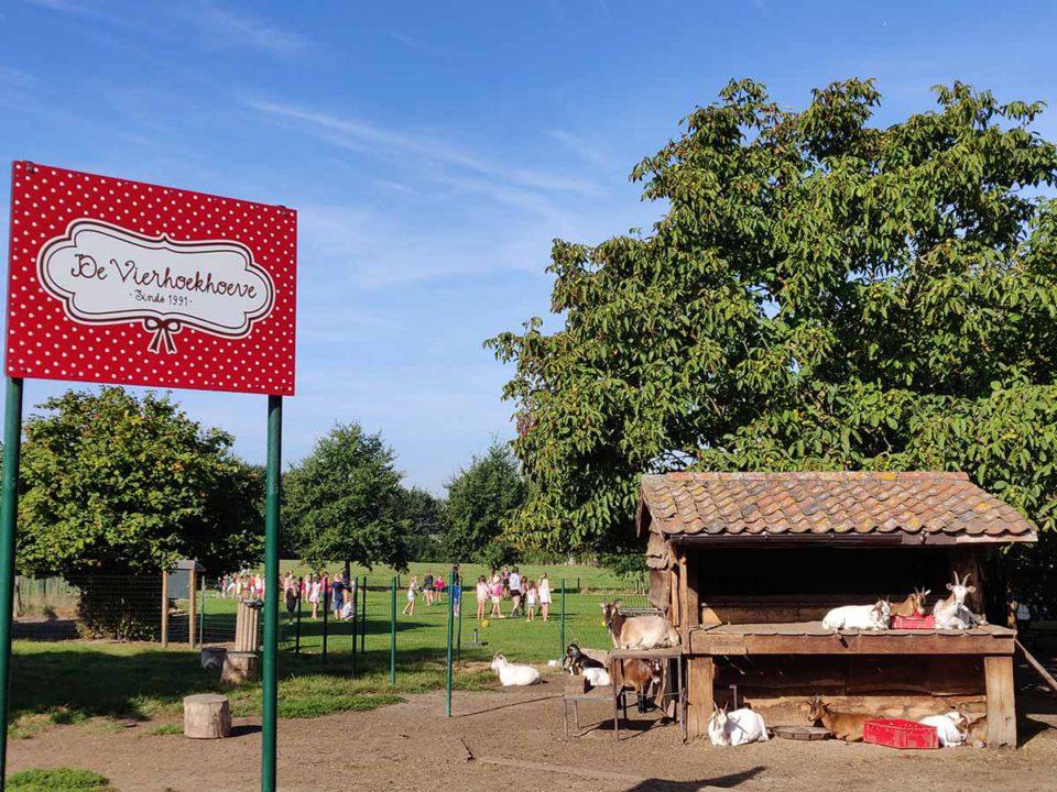De-Vierhoekhoeve-De-Kinderboerderij-Header