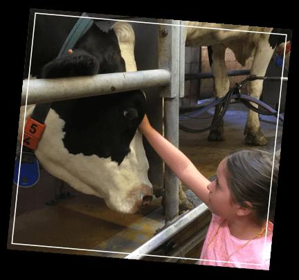De-Vierhoekhoeve-Boerderijklassen-Koeien